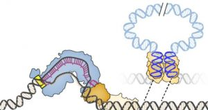 New gene editor harnesses jumping genes for precise DNA integration