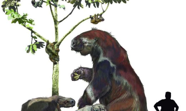 New research shakes up the sloth family tree