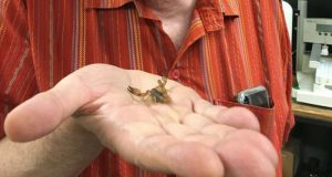 Researchers synthesize healing compounds in scorpion venom