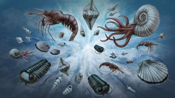 cropped A new normal Study explains universal pattern in fossil record