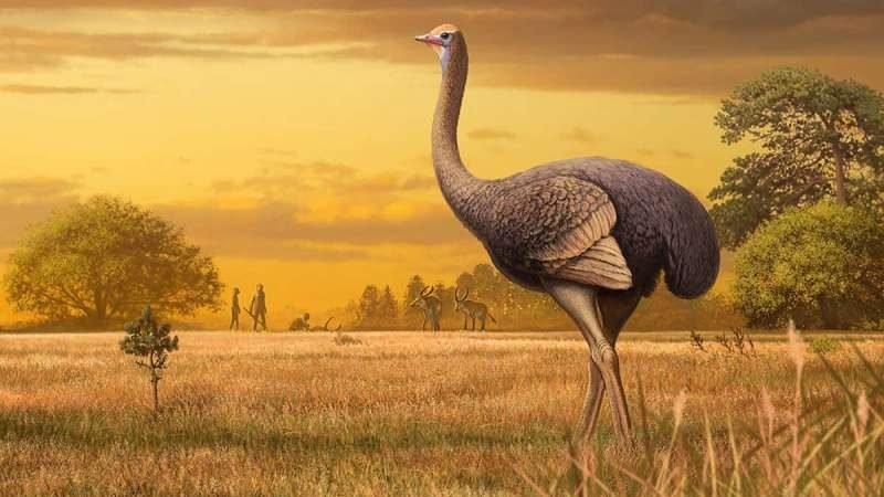 cropped Big birds Giant 1000 pound birds once roamed around Europe
