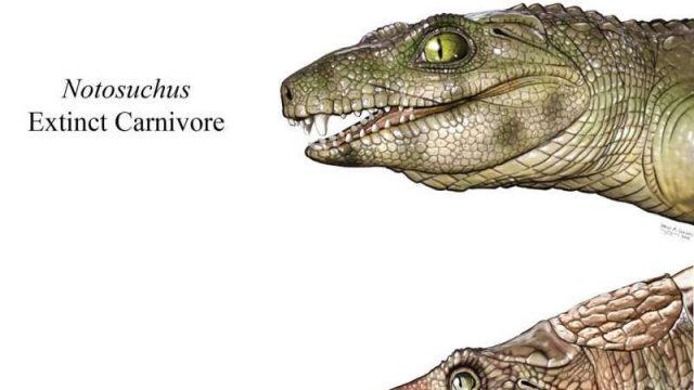 cropped Some extinct crocs were vegetarians