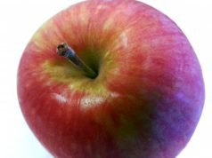 An apple carries about 100 million bacteria—good luck washing them off