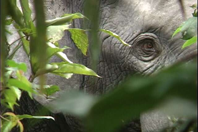 Elephant extinction will raise carbon dioxide levels in atmosphere 1