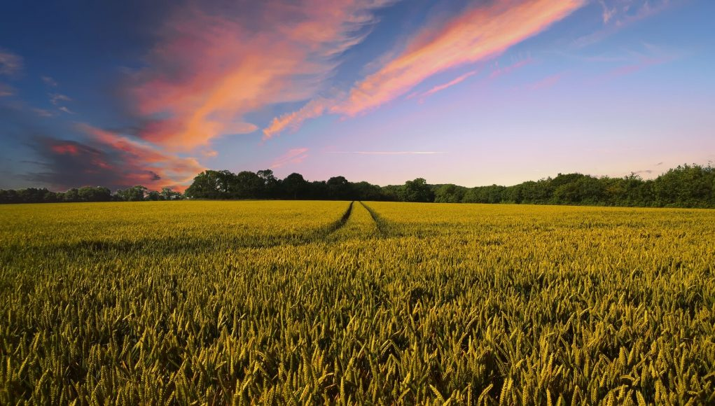 New study How much do climate fluctuations matter for global crop yields