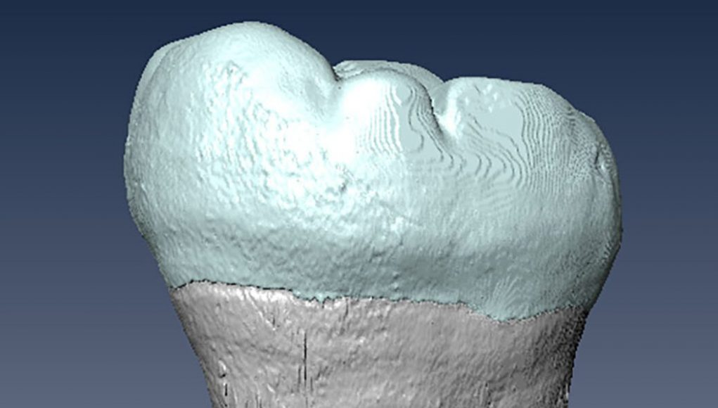 cropped Ancient molar points to interbreeding between archaic humans and Homo sapiens in Asia