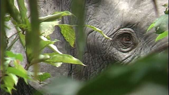 cropped Elephant extinction will raise carbon dioxide levels in atmosphere