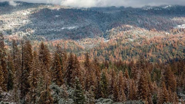 cropped Multi year drought caused massive forest die off in Sierra Nevada