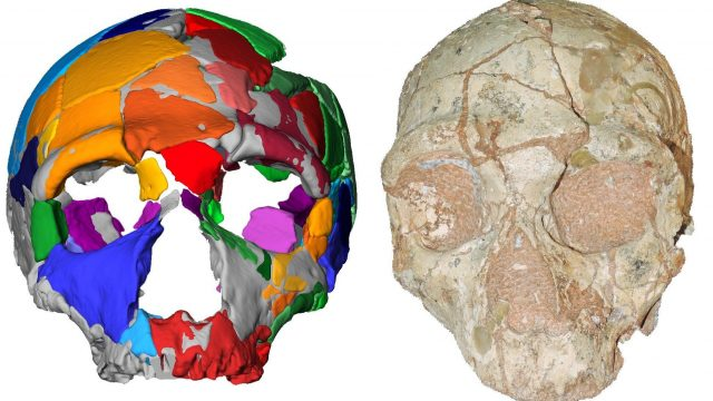 cropped Oldest remains outside Africa reset human migration clock