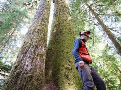 cropped Scientists find high mutation rates within huge old growth trees