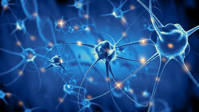 cropped Scientists stimulate neurons to induce particular perceptions in mices minds