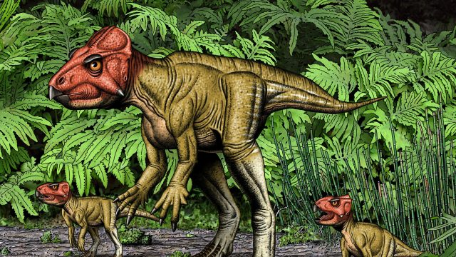 cropped Small horned dinosaur from China a Triceratops relative walked on two feet