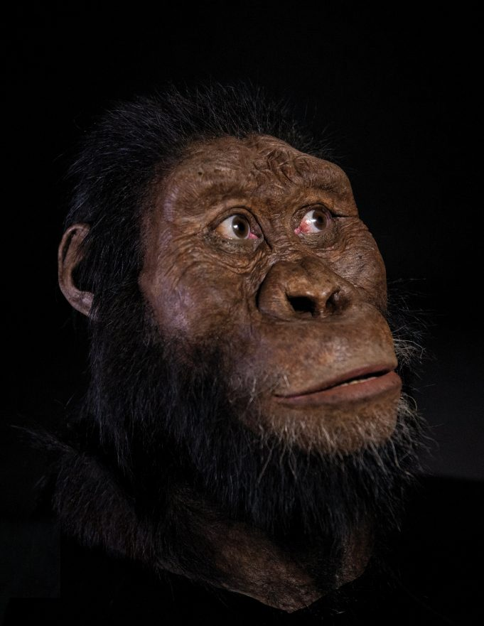 A 3.8 million year old fossil from Ethiopia reveals the face of Lucys ancestor
