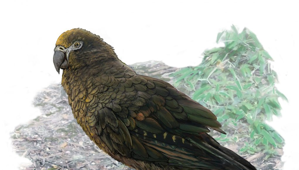 cropped A whopping squawkzilla Meet Hercules—the giant parrot that dwarfs its modern cousins
