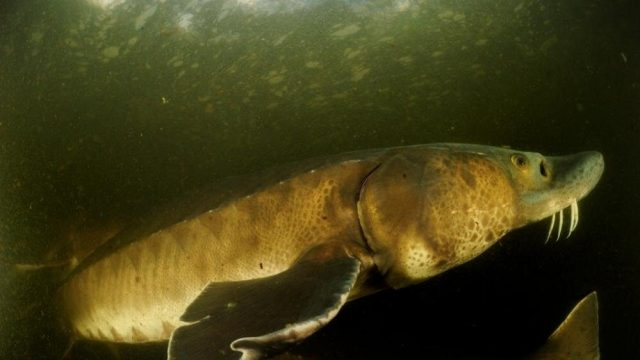 cropped An 88 percent decline in large freshwater animals