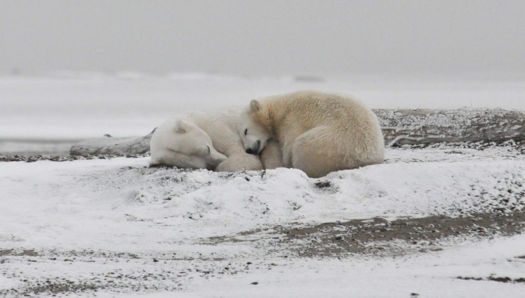 cropped Arctic Ocean could have no September sea ice if global average temperatures increase by 2 degrees