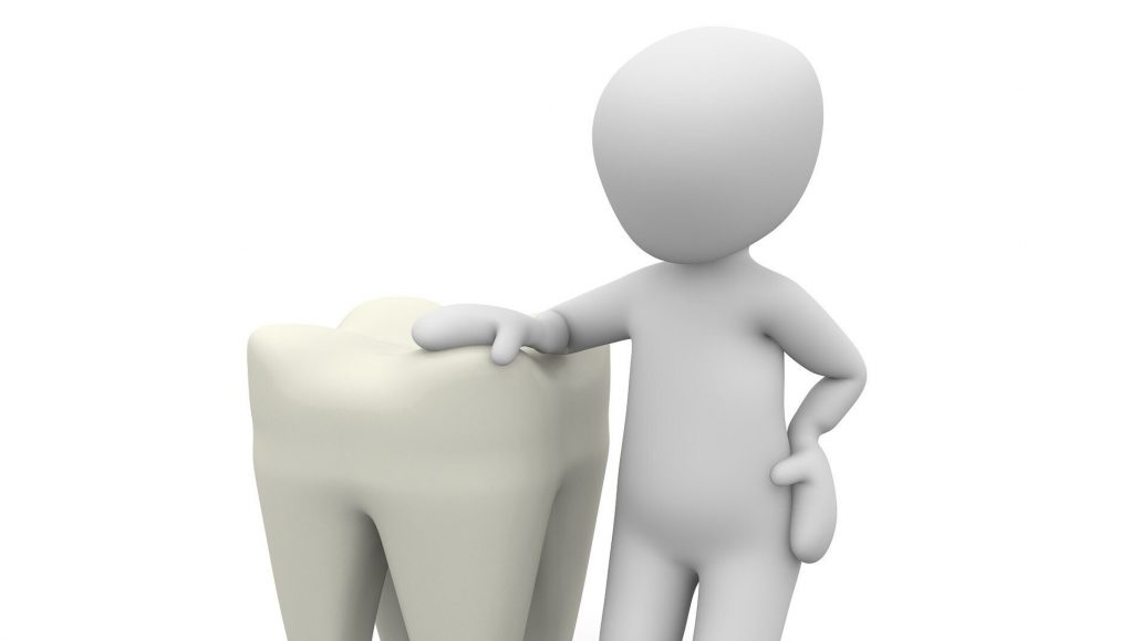 cropped Common origin identified could bring tooth regeneration potential closer