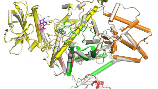 cropped Discovery provides path to pathogen targeted antibiotics