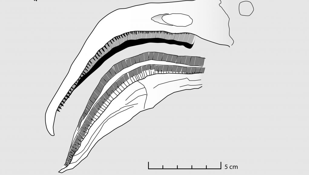 cropped Filter feeding pterosaurs were the flamingos of the Late Jurassic