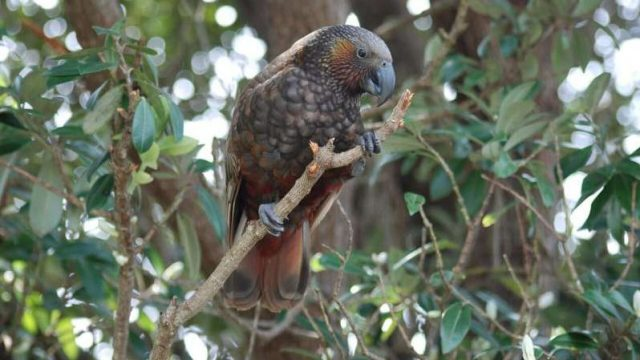 cropped It would take 50 million years to recover New Zealands lost bird species