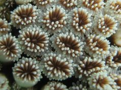 cropped New study reveals impact of mining on coral reefs