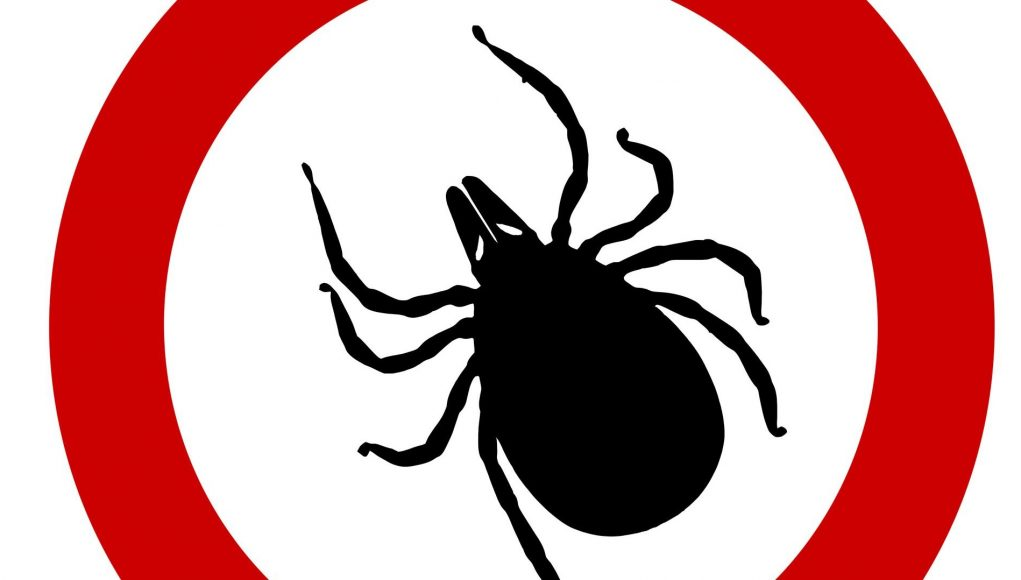 cropped New way to bump off ticks Dry up their saliva