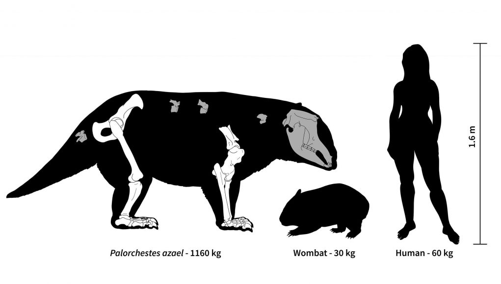 cropped Ancient Australia was home to strange marsupial giants some weighing over 1000 kg