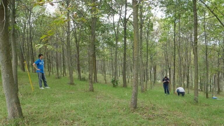 cropped Ash tree species likely will survive emerald ash borer beetles but just barely