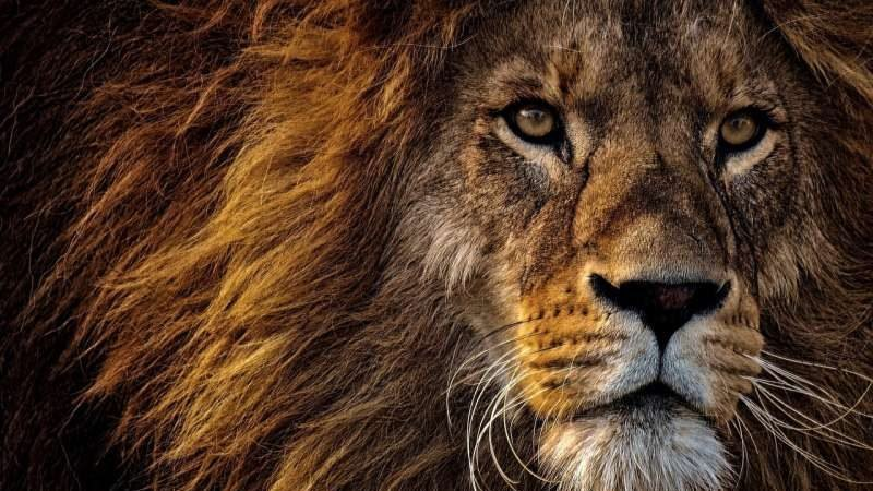 cropped Banning trophy hunting can have a detrimental impact experts say