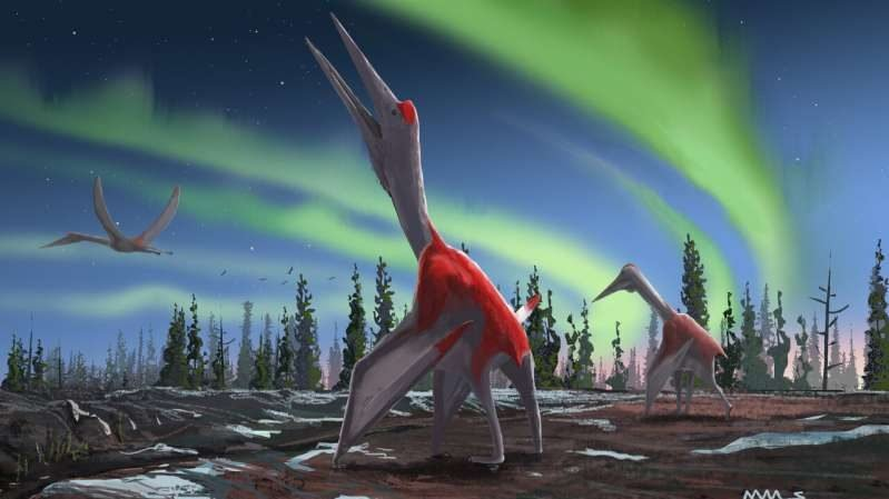 cropped New flying reptile species was one of largest ever flying animals