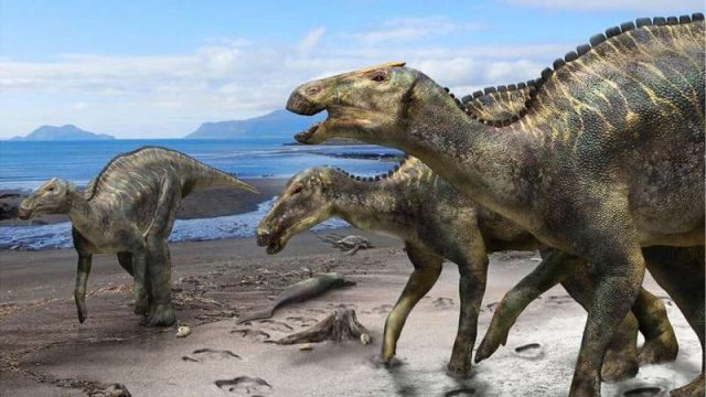 cropped New hadrosaur from Japan sheds light on dinosaur diversity