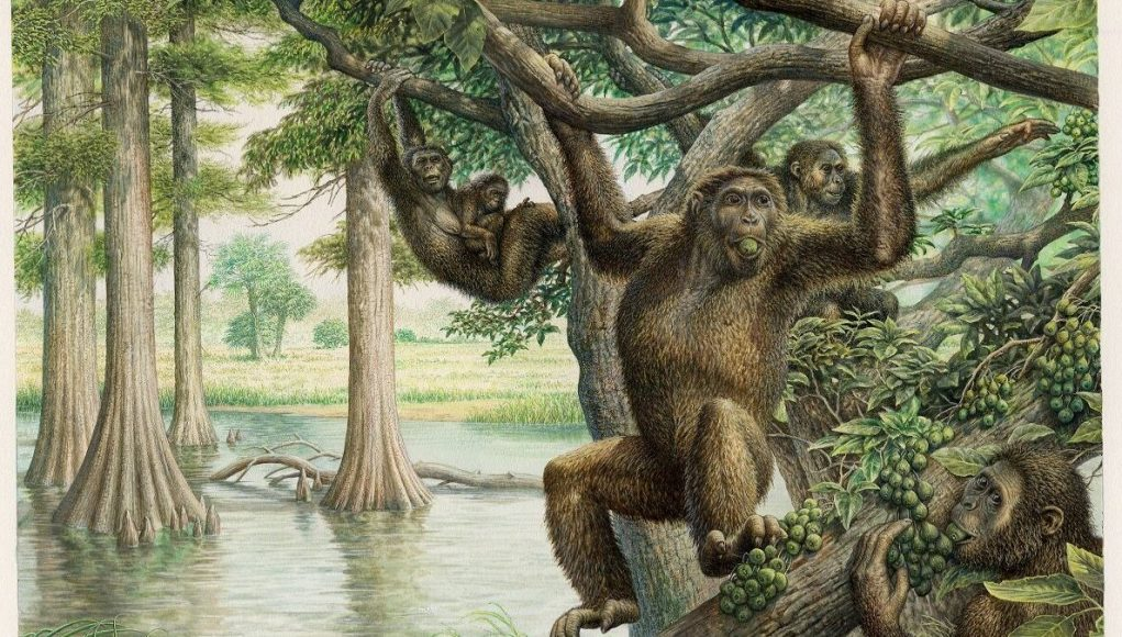 cropped Rare 10 million year old fossil unearths new view of human evolution