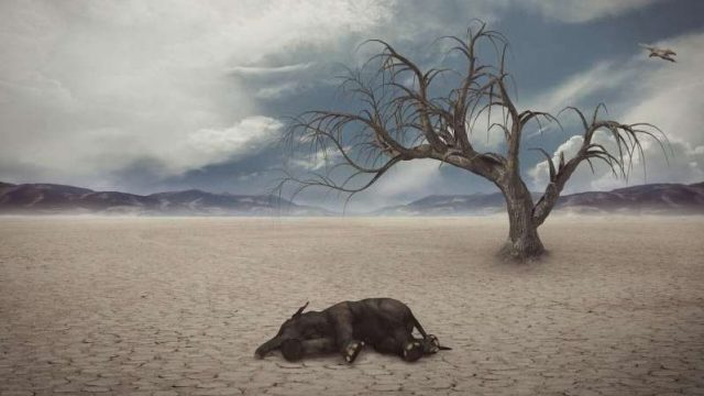 cropped Researchers unearth new extinction