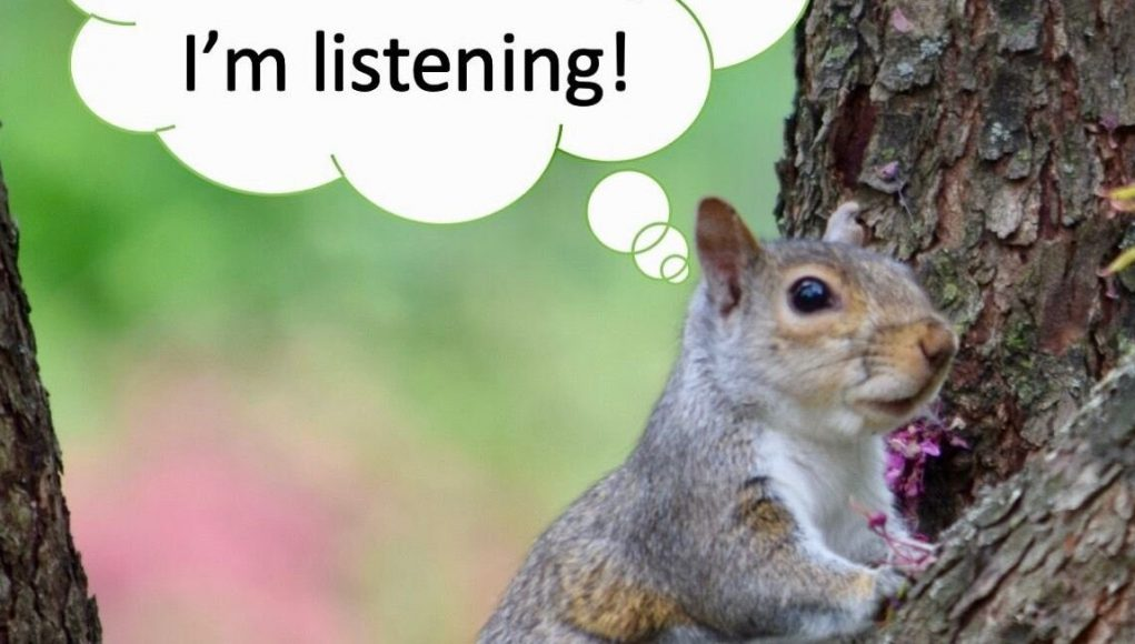cropped Squirrels listen in to birds conversations as signal of safety