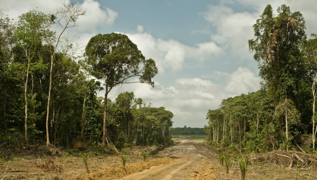 Carbon bomb Study says climate impact from loss of intact tropical forests grossly underreported
