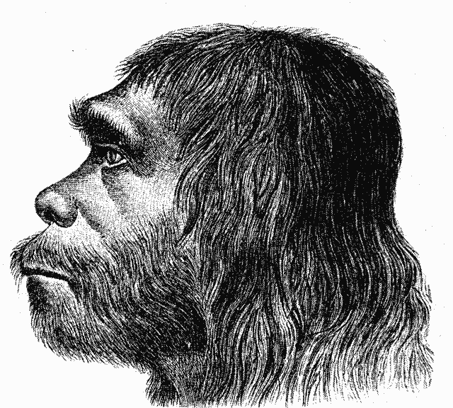 How differences in the genetic instruction booklet between humans and Neanderthals influenced traits