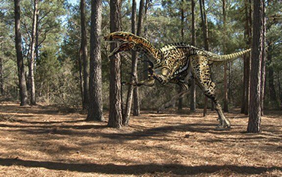 Huge clawed predatory dinosaur discovery in Victoria