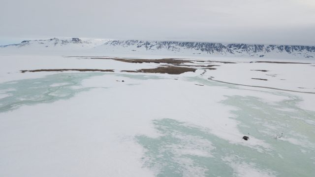 Last years extreme snowfall wiped out breeding of Arctic animals and plants