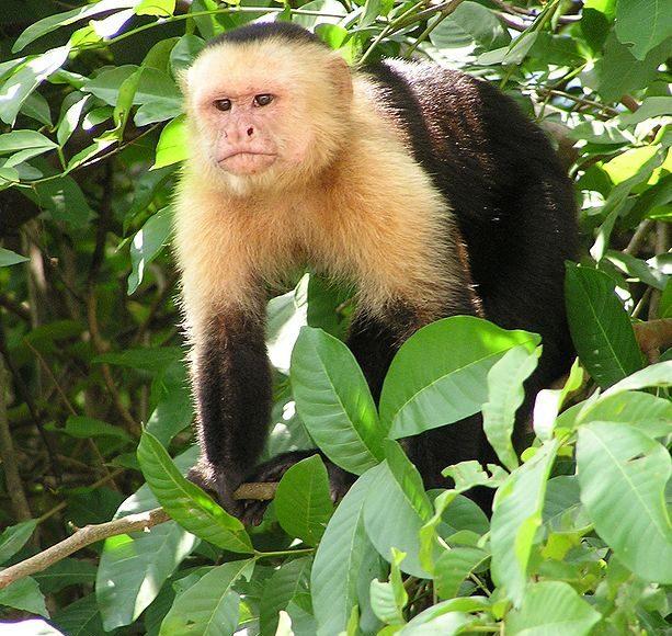 Monkeys outperform humans when it comes to cognitive flexibility study finds