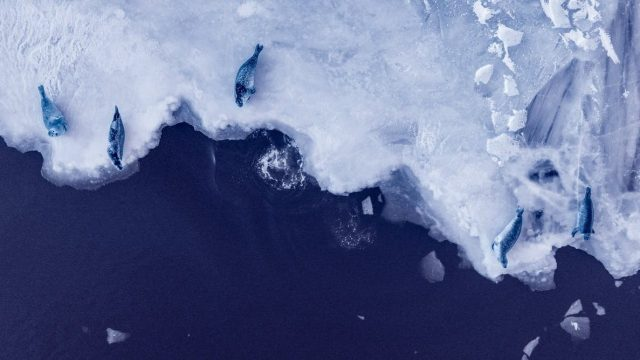 cropped If warming exceeds 2 C Antarcticas melting ice sheets could raise seas 20 meters in coming centuries