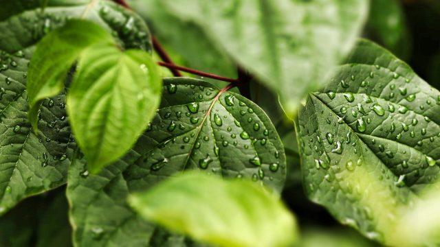cropped Plants alert neighbors to threats using common language