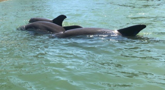 Dolphins demonstrate coordinated cooperation
