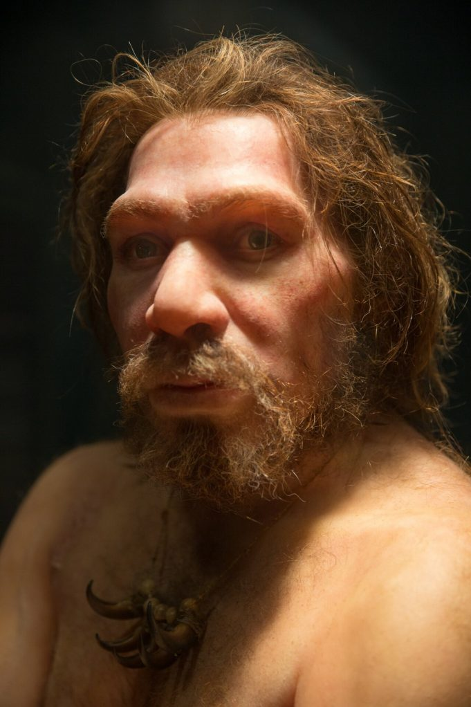 Inbreeding and populationdemographic shifts could have led to Neanderthal extinction