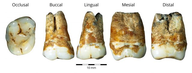 Study reveals that humans migrated from Europe to the Levant 40000 years ago