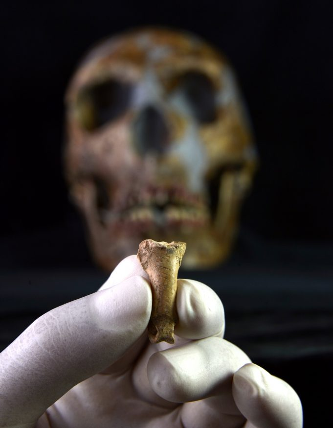 The last Neanderthal necklace 1