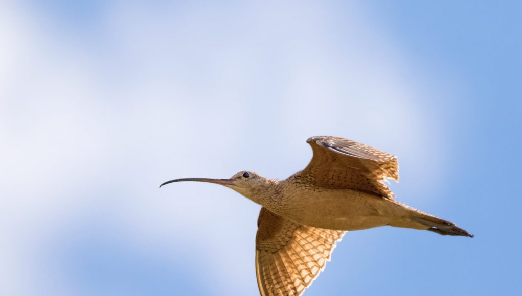 Bird migration timing skewed by climate new research finds scaled