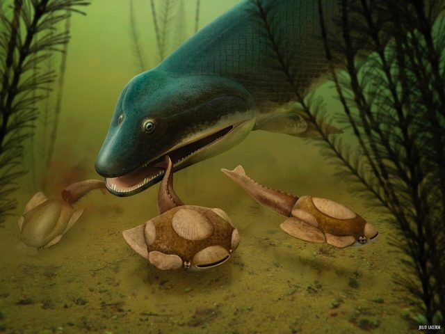 Bite marks in fossils reveal demise of our early relatives
