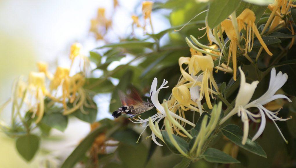 Breakthrough in battle against invasive plants