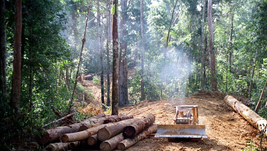 Degraded soils mean tropical forests may never fully recover from logging scaled