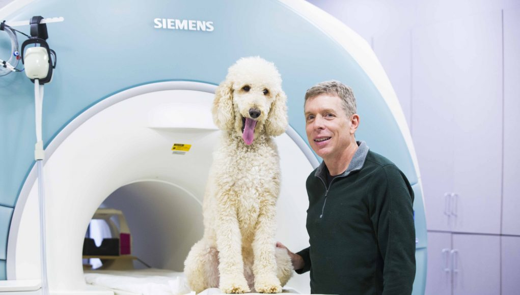 Dogs process numerical quantities in similar brain region as humans study finds scaled